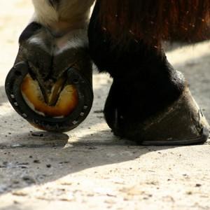 feet_horse